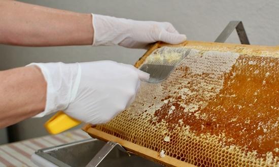 Mật ong nguyên chất - Cách nhận biết mật ong rừng nguyên chất