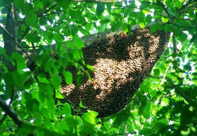 mật ong rừng nguyên chất mua ở đâu